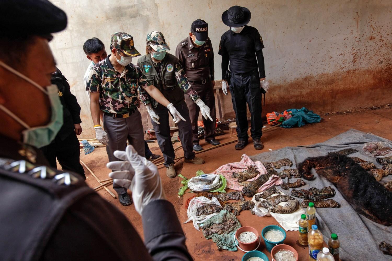 mrtva mladata nalezena v tygrim chramu