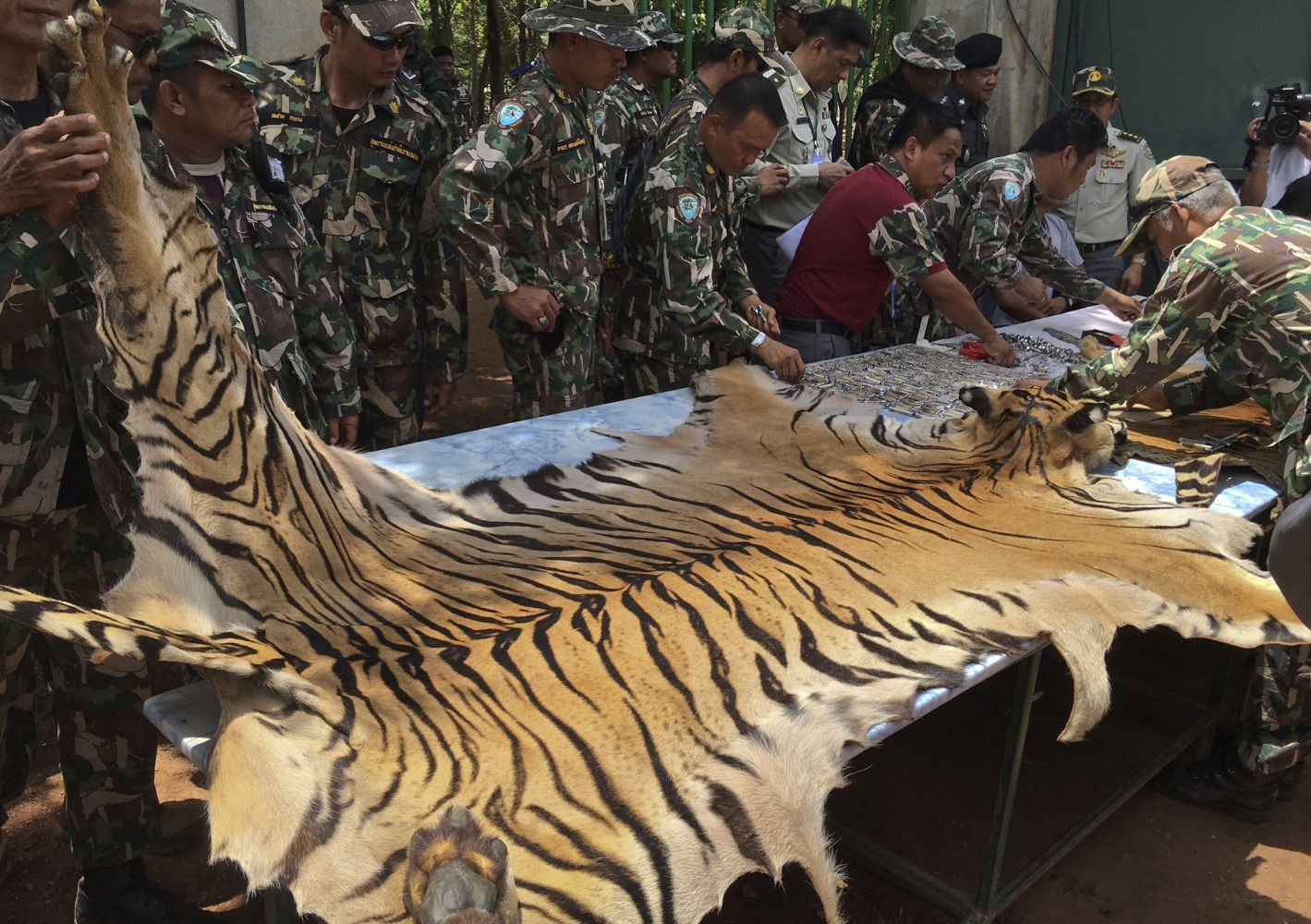 Big Cats Are Finally Being Removed From Thailand's Controversial Tiger Temple