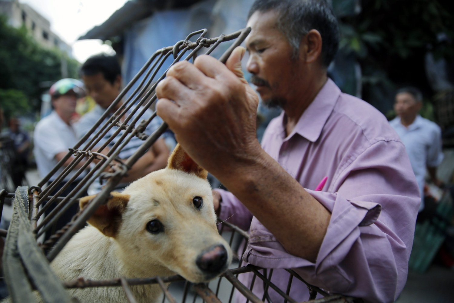 China Dog-Meat Festival Gets Low-Key Opening Amid Protests ... - photo#26