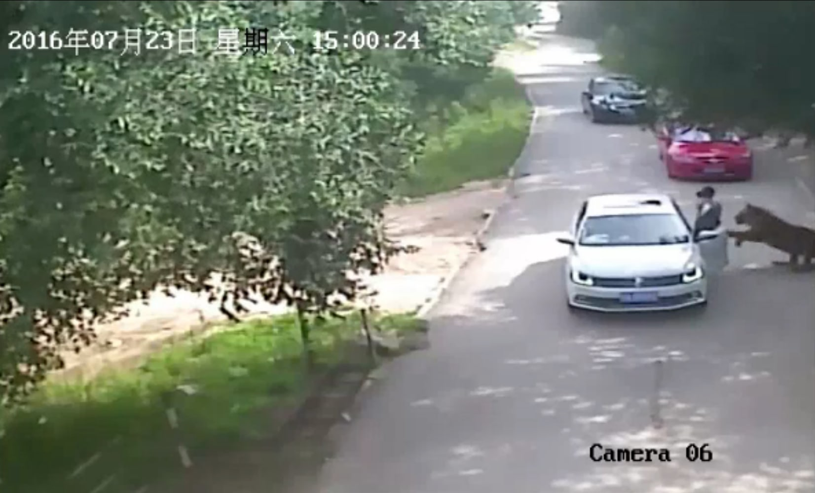 Tiger Attacks Tourist Kills Another At China Safari Park
