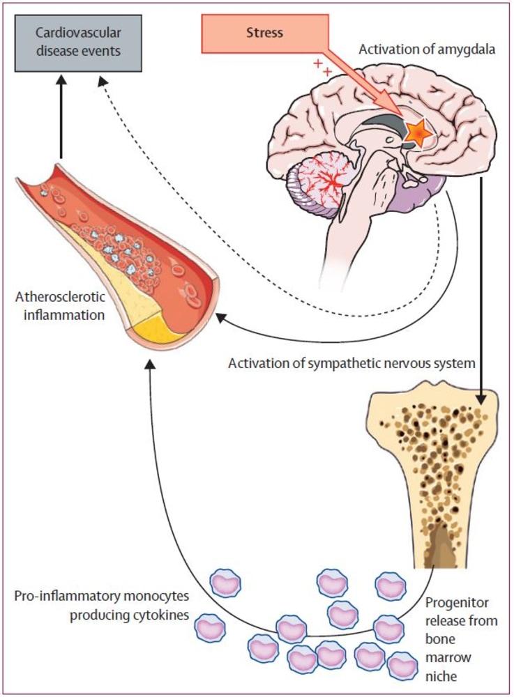 Brain enhancing supplements picture 1