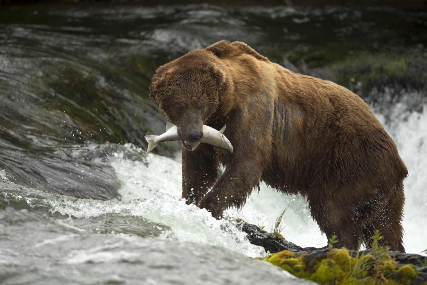 House Overturns Obama-Era Law To Protect Alaskan Bears And