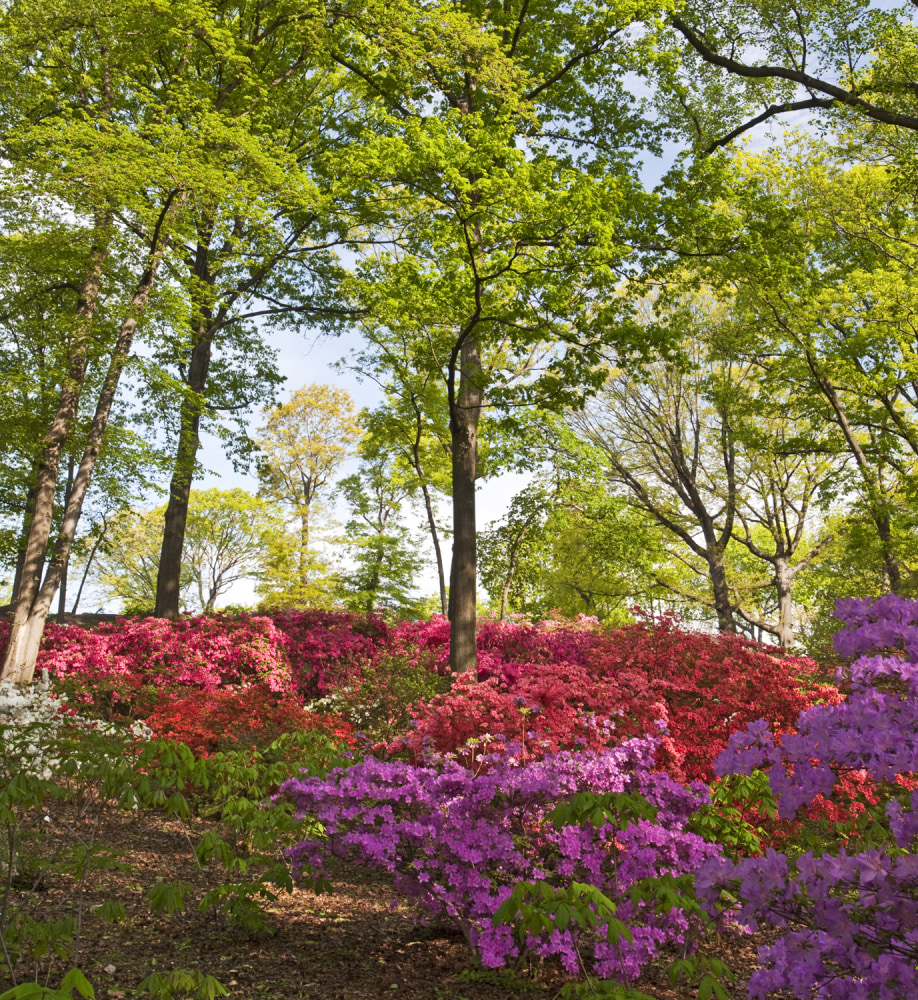 April travel deals don 39 t let tax day stop you from having - Bronx botanical garden free admission ...