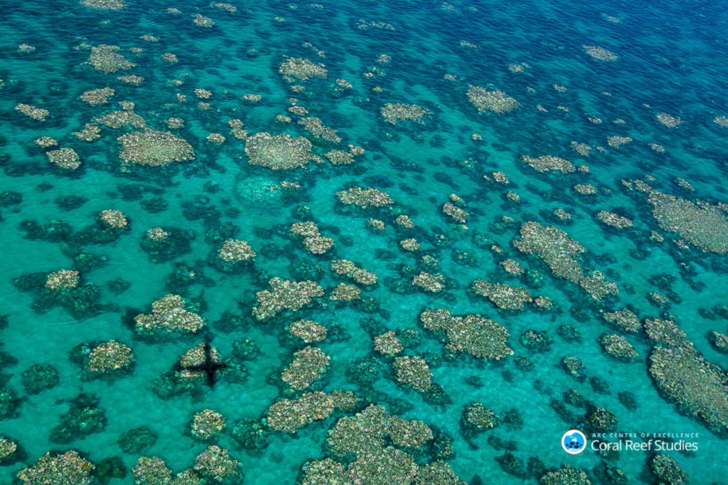 case study great barrier reef Reef rescue plan one of the jewels in australia's ecological crown, the great barrier reef is a vast interlacing web of organisms, all of which have a vital role to play in keeping the.