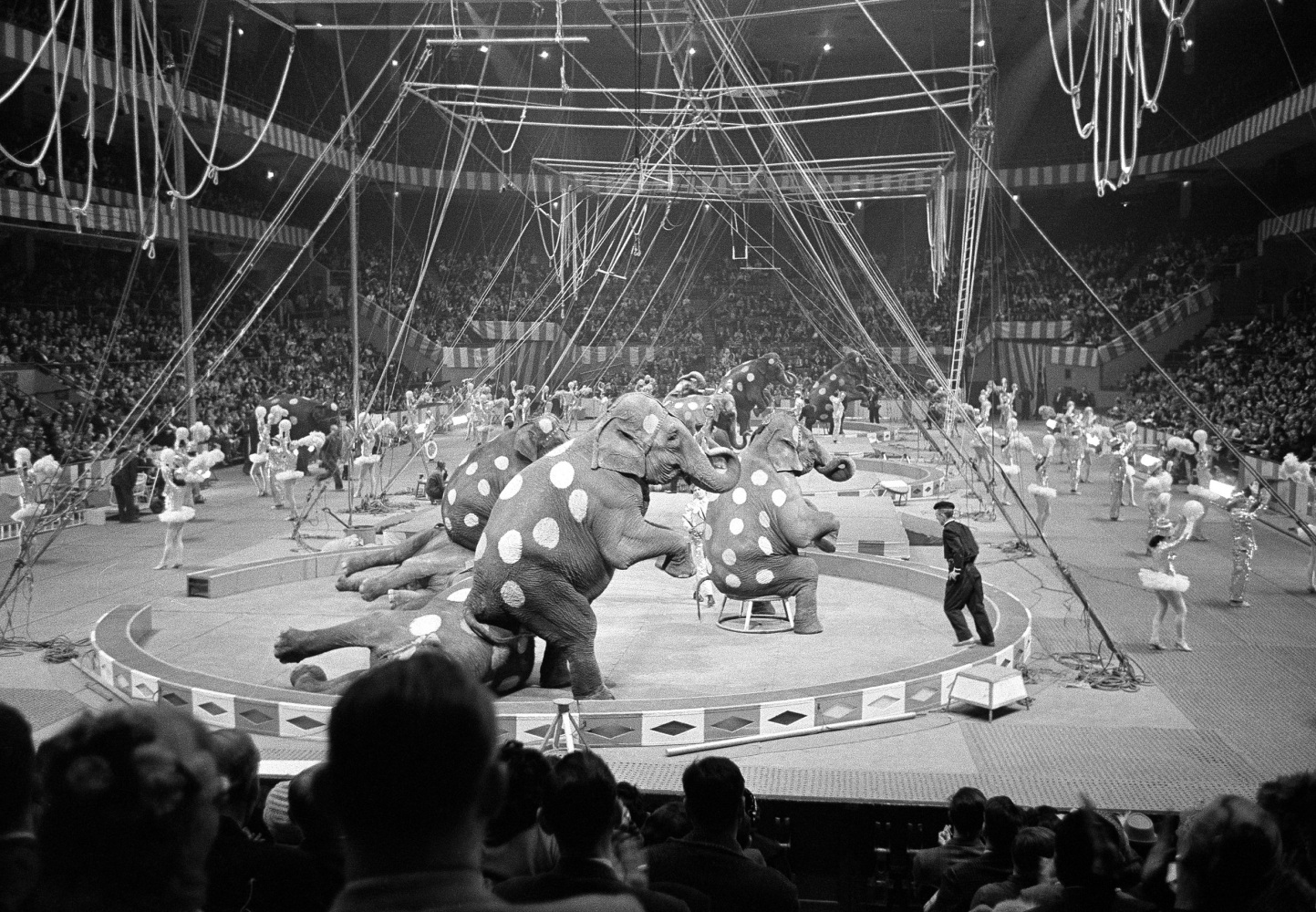 Ringling Bros Circus Prepares For Final Bow Of 39 Greatest Show On Earth 39 Nbc News