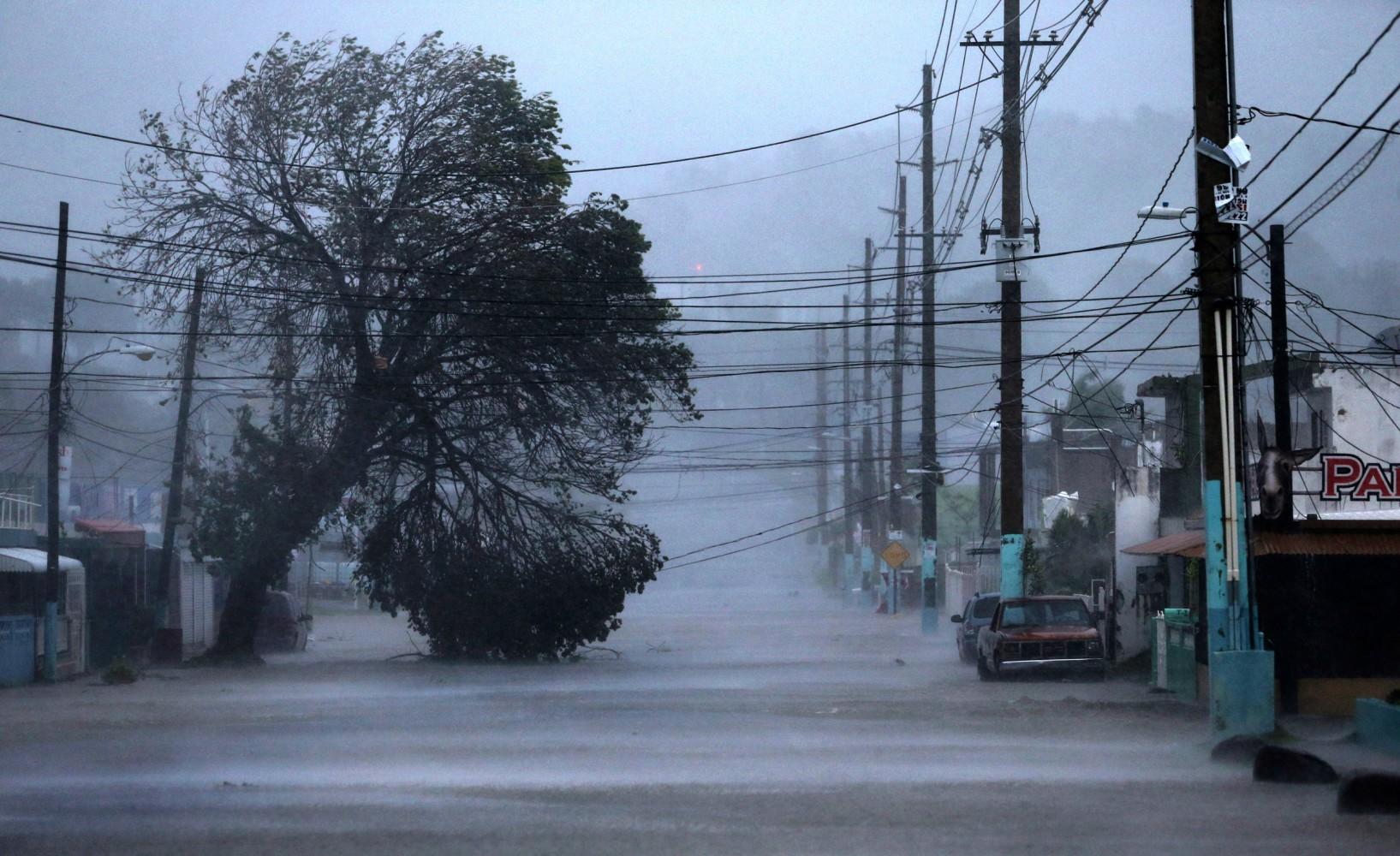 downed tree Puerto Rico hurricane