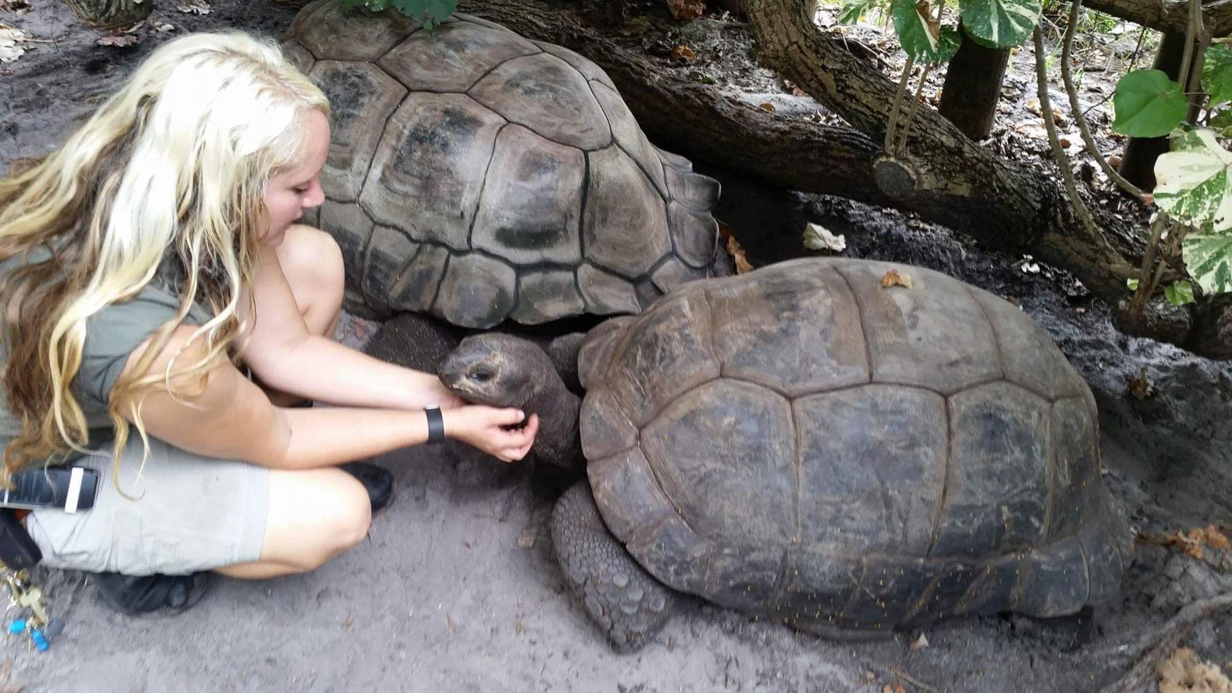 Warning turtles amp tortoises inc - Image Palm Beach Zoo Aldabra Tortoises
