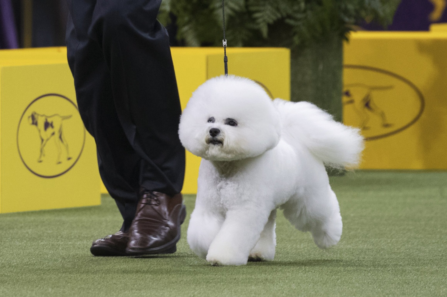Westminster Dog Show Results