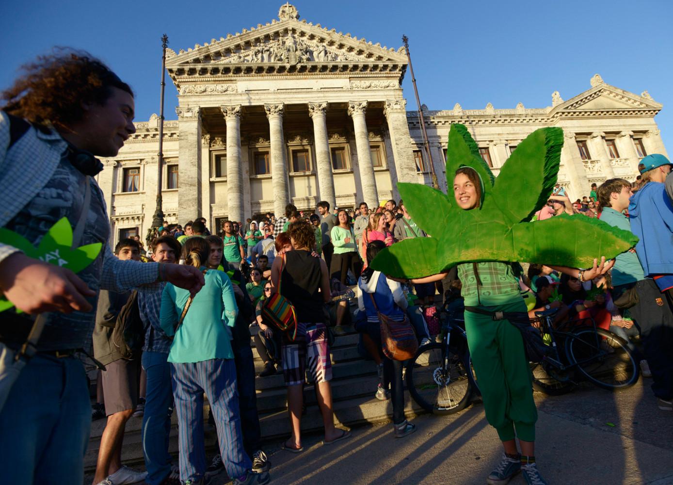 В уругвае легализация марихуаны марихуана обои для планшета