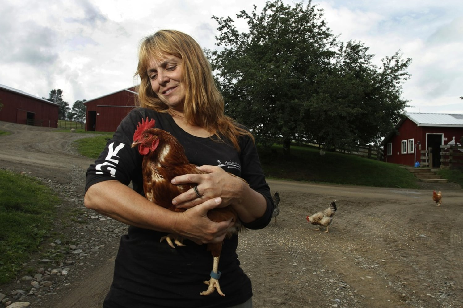 Hipster Backyard Chickens : Backyard chickens dumped at shelters when hipsters cant cope, critics