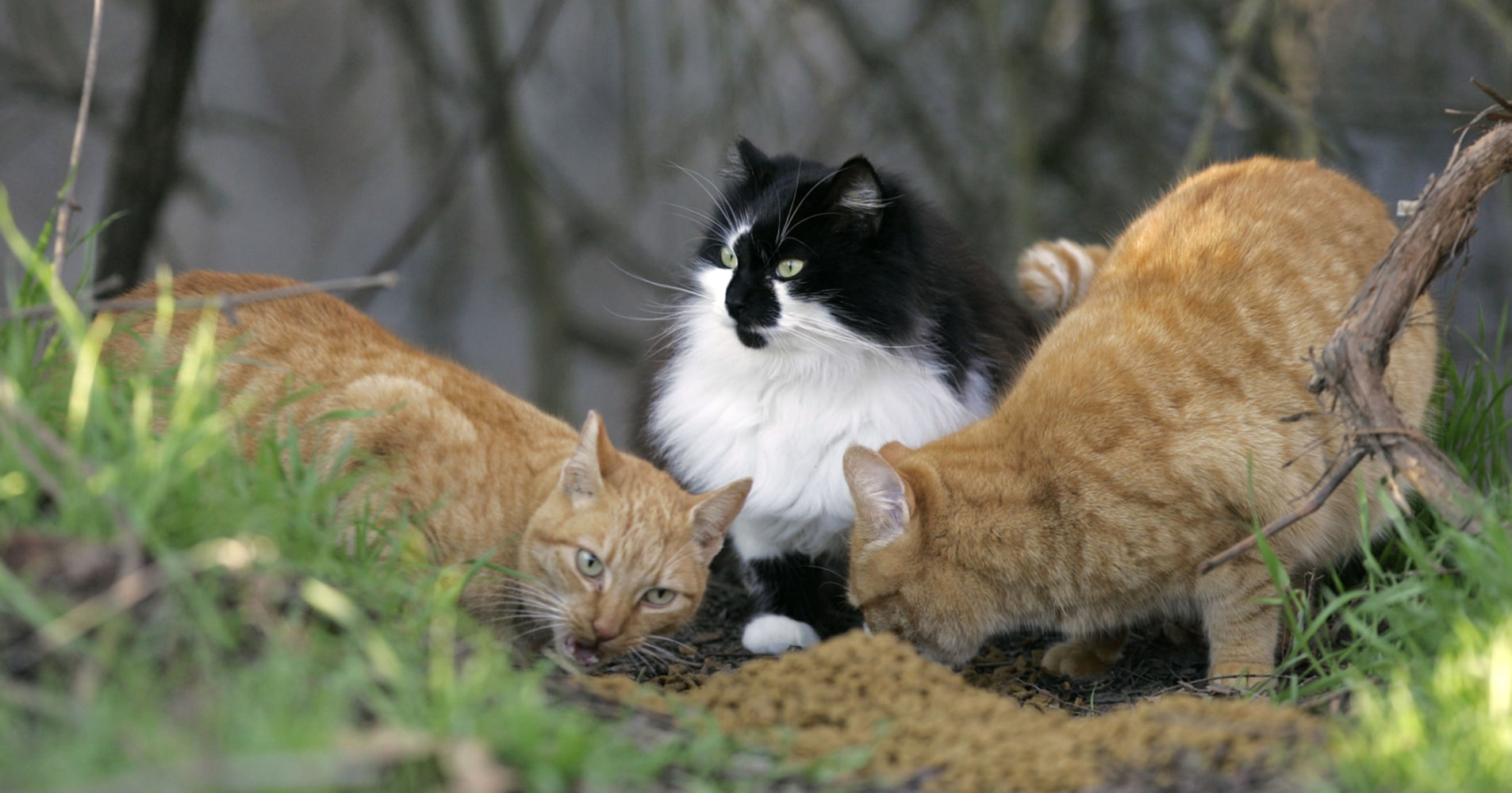 cat parasites may pose public health hazard study suggests