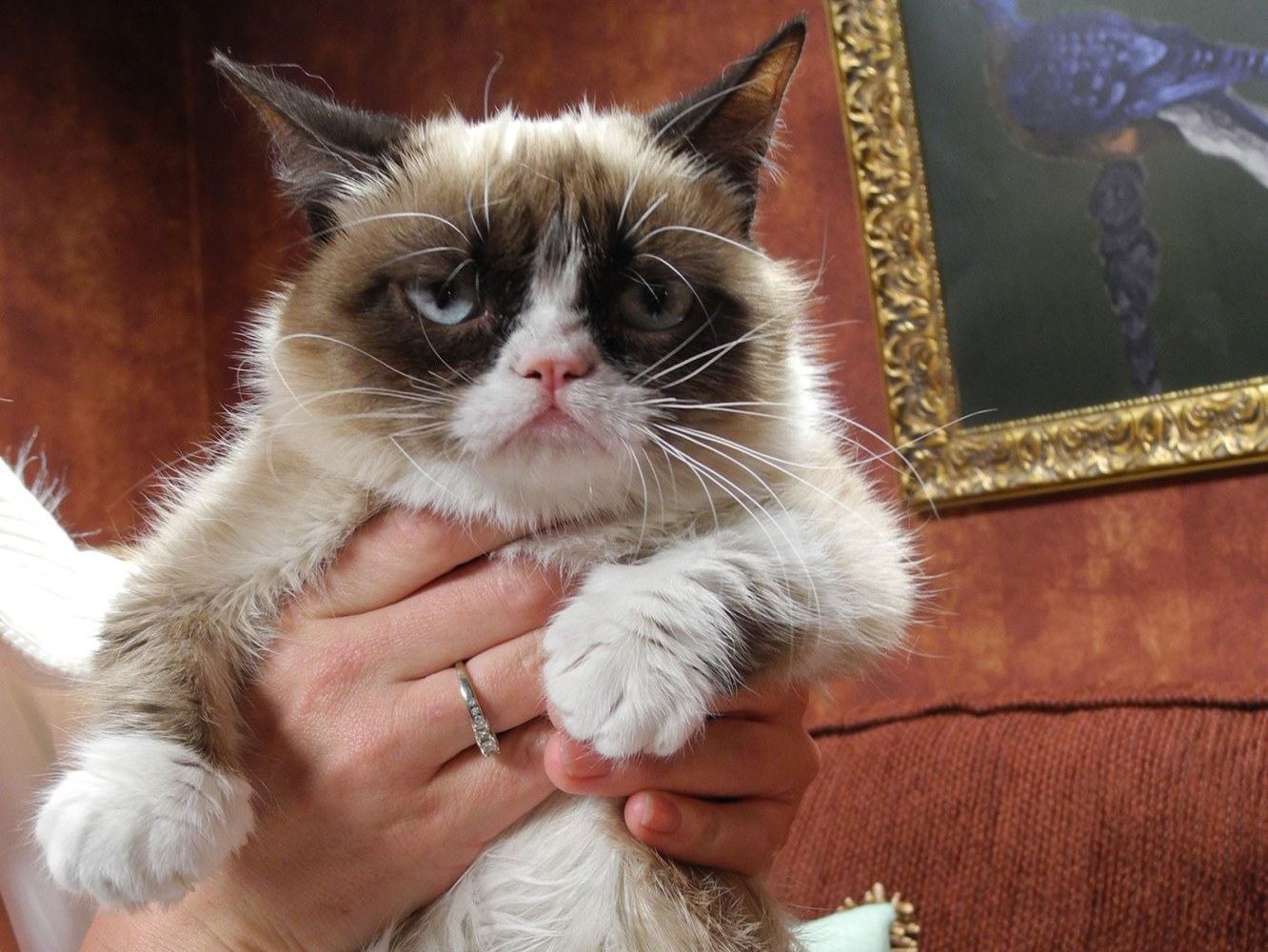 sex death and grumpy cat the true meaning of sxsw nbc news. Black Bedroom Furniture Sets. Home Design Ideas