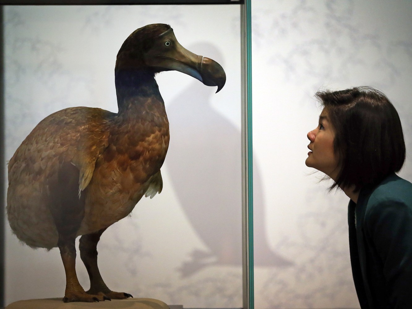 When did the dodo go extinct? Maybe later than we thought - NBC News