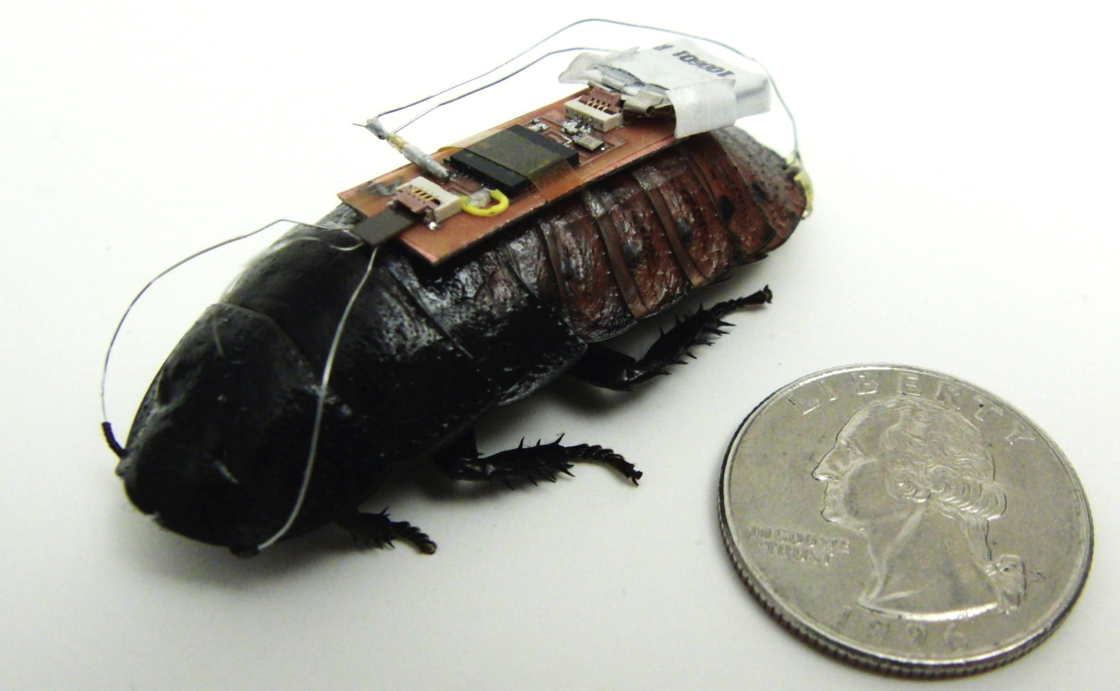 Don't panic! These cyborg roaches are trained for emergencies