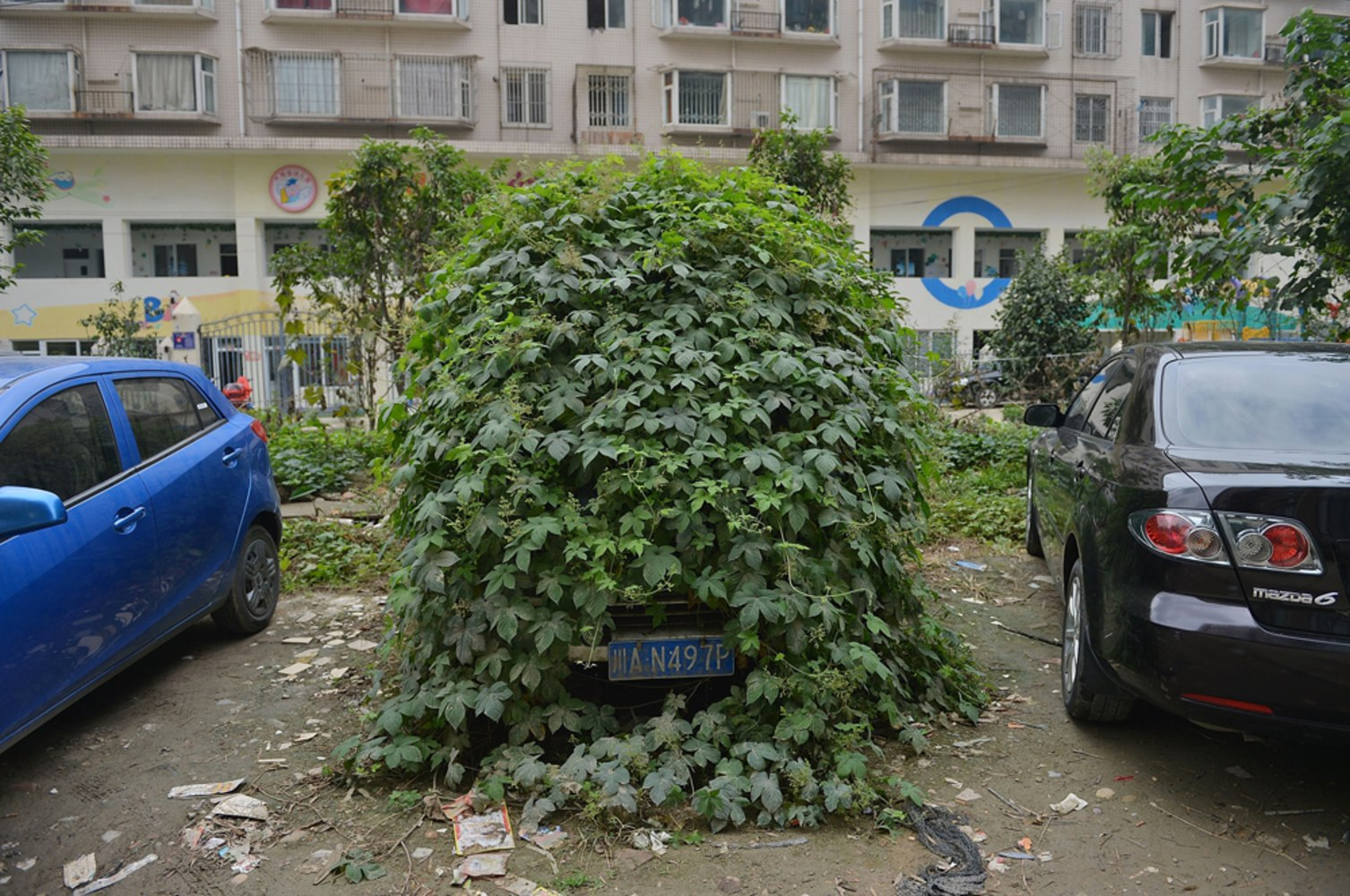 Zombie Car Abandoned In China Street Overgrown With Ivy Nbc News