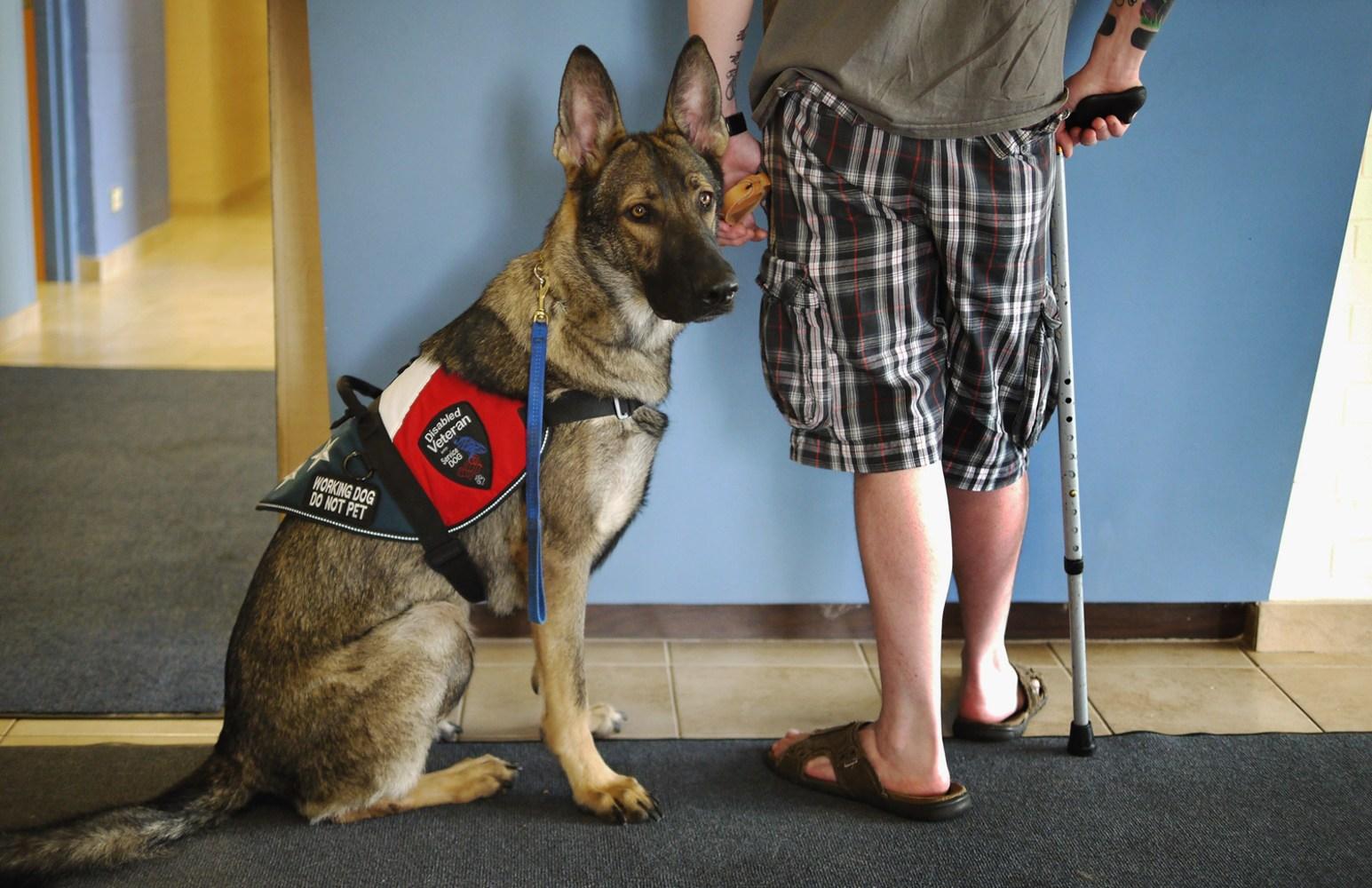 Psychiatric Service Dog Training Chicago