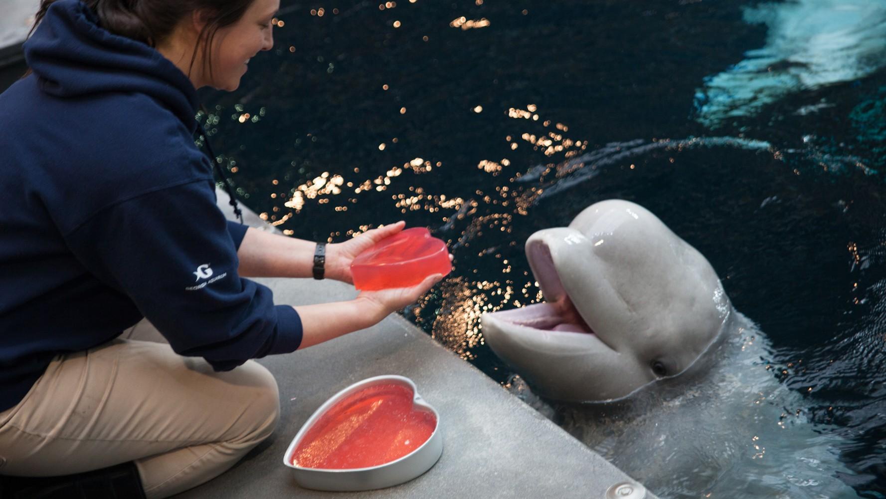whale you be my valentine aquarium animals celebrate v day nbc news