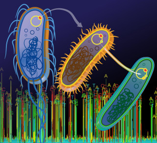 Image: Plasmid transfer between bacterial species can be investigated with single-molecule DNA sequencing technology.