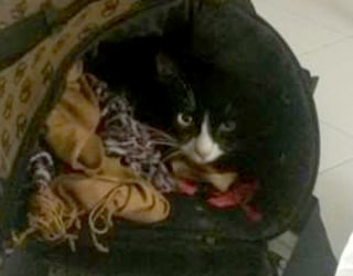 Cat Survives Migrant Crossing with Owner