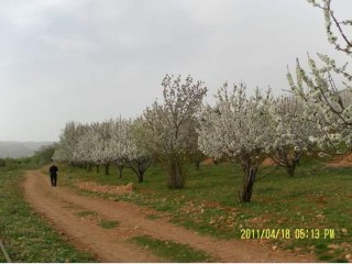 IMAGE: Madaya, Syria