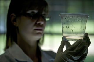 Image: BRAZIL-SENEGAL-SCIENCE-HEALTH-ZIKA-VIRUS