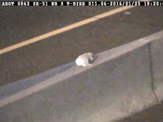 IMAGE: Puppy stranded on median
