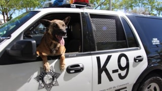 IMAGE: Las Vegas K9 officer Nicky