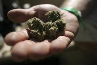An attendee holds marijuana buds at the International Cannabis & Hemp Expo in Oakland