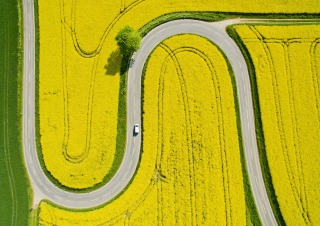 Image: A car makes its way on a road through flowering canola fields