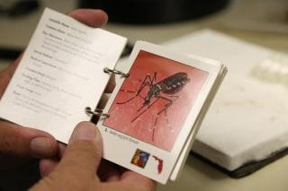 Image: Zika