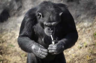 Image: Azalea lights a cigarette at the Central Zoo in Pyongyang, Wednesday.