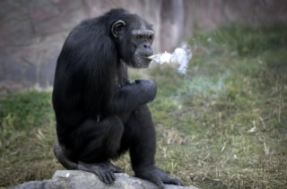 Image: Azalea smokes about a pack of cigarettes a day but apparently doesn't inhale.
