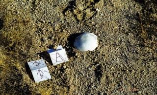 IMAGE: Skeletal fragments from Crystal Reyes