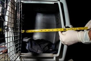 IMAGE: Crystal Reyes' dog kennel