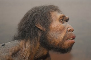 Human Origins: New permanent Exhibit at the Museum of Natural History in New York, Human origins
