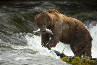 Image: Grizzly