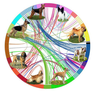 Image: A diagram representing the genetic analysis of dog breeds