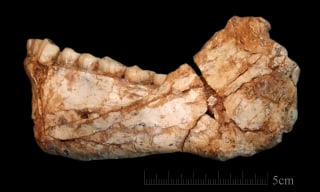Image: Oldest Homo Sapiens fossils found in Morocco