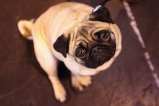 Image: A cute dog