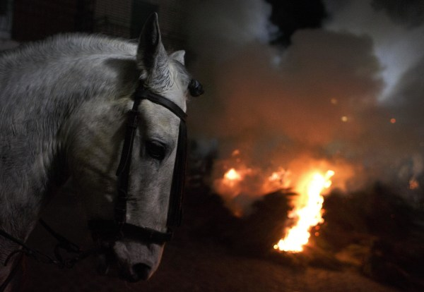 """Image: A horse stands near a fire during the """"Luminarias"""" annual religious celebration in San Bartolome de los Pinares"""