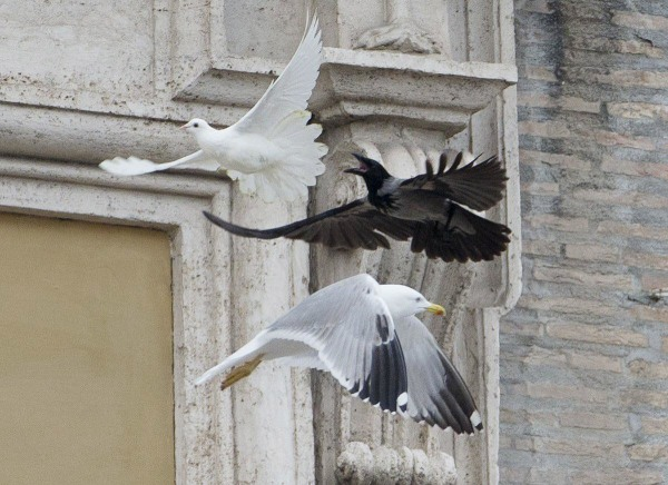 Image: A dove which was freed by children flanked by Pope Francis during the Angelus prayer, is chased by a black crow in St. Peter's Square, at the Vatican, Sunday, Jan. 26, 2014.