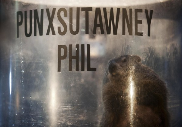 Image: Punxsutawney Phil