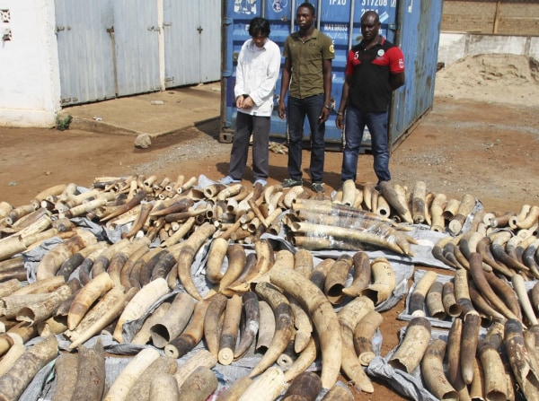 Image: A Vietnamese man identified as Huu Dinh Khao and two Togolese men stand next to a haul of ivory tusks after being seized by security forces at the port of Lome