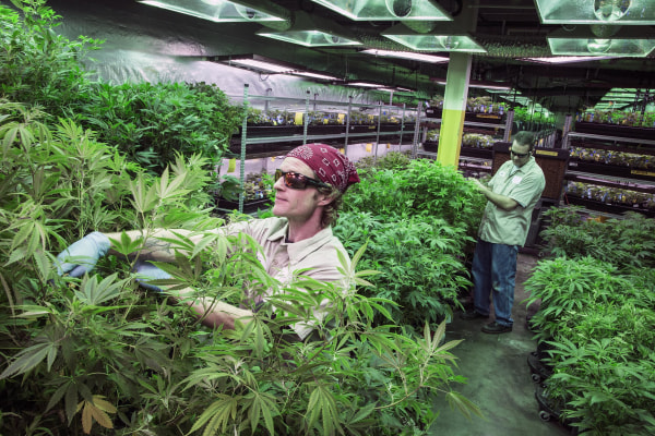 Image:  Medicine Man marijuana dispensary and grow house