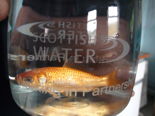 Image: A goldfish in a jar