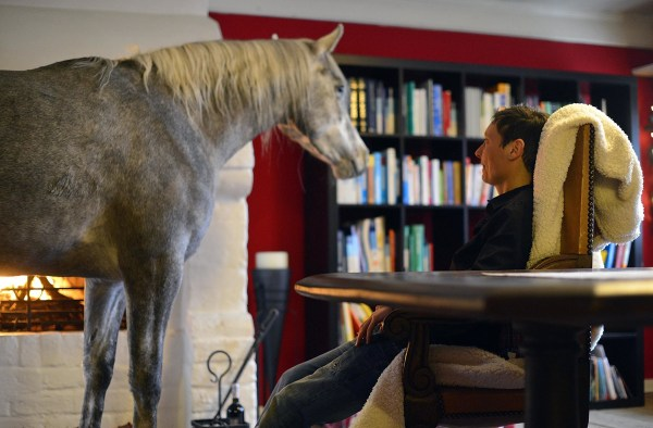 Image: Doctor Shares Her House With A Horse Following Storm