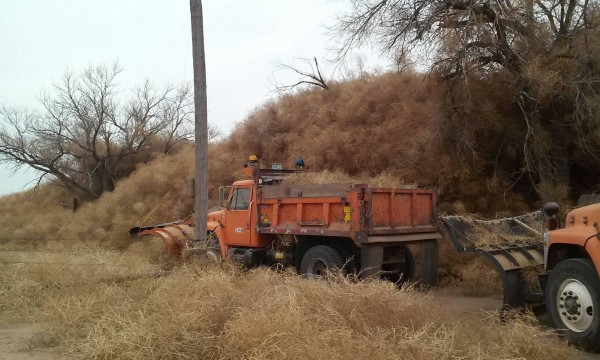 Snowplows clear a rural road of tumbleweeds nearing fifteen feet in height in Crowley County, Colorado