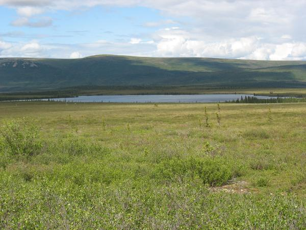 Image: Alaska shrub tundra