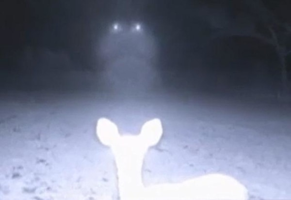 Image: Deer cam`