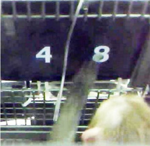 Image: A rhesus monkey chooses a number that will get it the largest reward.
